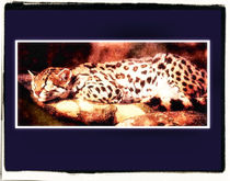 Sleeping Leopard by Brian Grady