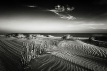 7029-0212-sylt-impressions-74