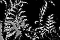 Metal Leaves by Daniel Poole