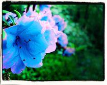 Flower-entry-jan-31
