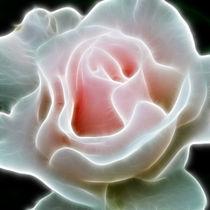 Pink Rose von Alice Gosling