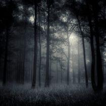 deep forest by Jaromir Hron