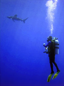 Watching the Oceanic Whitetip by serenityphotography