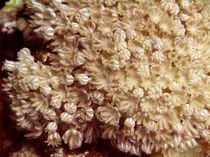 Coral-feeding-02