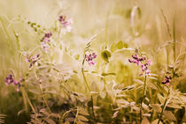 sommerwiese - summer meadow by augenwerk