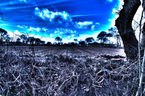 Surrealhdr2