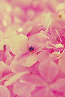 Hydrangea Macro Petals von rosanna zavanaiu