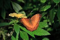 Cruiser Butterfly von Louise Heusinkveld