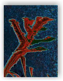 Tricolor by Karel Plechac