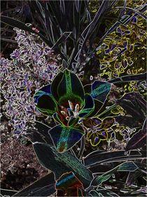 Blumenblüte von Karel Plechac