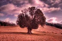 One Tree Hill von deanmessengerphotography
