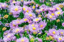 Natural Flowers von markowmedia