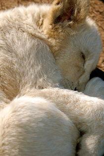 Cute Cub by bibi-photo-hunter