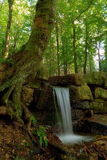 Magic Forest by Jürgen Mayer