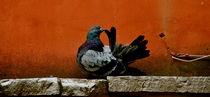 Pruning Pigeon Cropped by bibi-photo-hunter