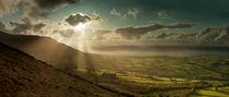 Cribyn Sunburst von Nigel Forster