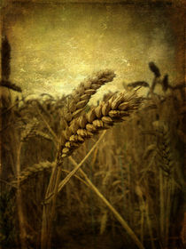 Wheat Field von Sarah Couzens