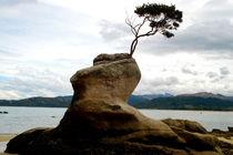 Baum von Philipp Meier