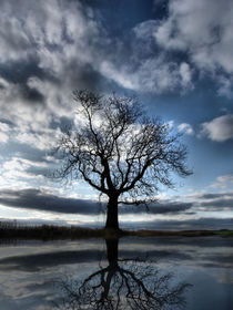 Wintering Oak Tree by Sarah Couzens