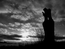 Tree Stump by Sarah Couzens