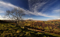 Duffryn Crawnon Tree by Nigel Forster