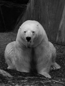 The Polar Bear von Sebastian Luedke