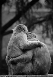 Monkey Love von Sebastian Luedke