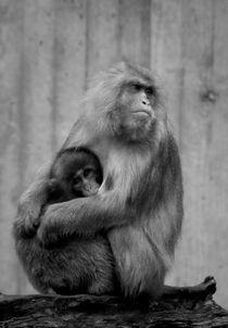 Monkey Love II von Sebastian Luedke