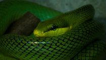 The Snake by Sebastian Luedke