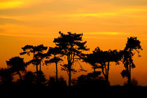 Sunset Trees by serenityphotography