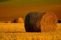 A Roll in the Hay von serenityphotography