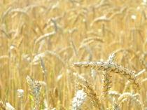 Wheat (plain) von Gelu Timoficiuc