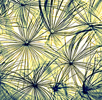 Dandelion seedhead yellow toned. von rosanna zavanaiu