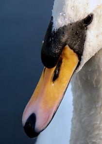 Zwaan/Swan von Paula van der Horst