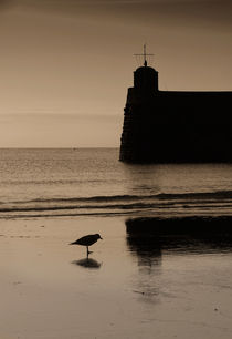 Seagull at Saundersfoot von Nigel Forster