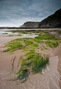 Druidston beach von Nigel Forster