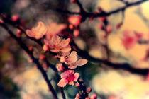 Spring Treasure von Emily Scott