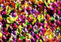 Blumenträume von Eckhard Röder