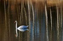 Weerspiegelingen in het water/Reflections in the water von Paula van der Horst
