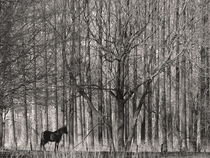 Paard in het bos/Hors in the forest von Paula van der Horst