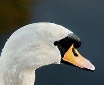 Portret van een Zwaan/Portret of a Swan by Paula van der Horst