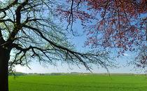 Spring Bliss von ovan