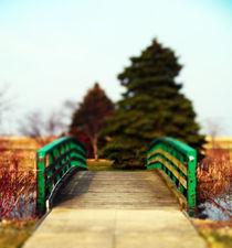 Natures Bridge von Angela Pari Dominic Chumroo