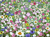 flower-power by Christine  Hofmann