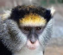 Aap/Monkey by Paula van der Horst