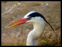 Great Blue Heron in Color von Mark Cowie