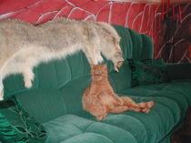 Katze Kater von kaatz