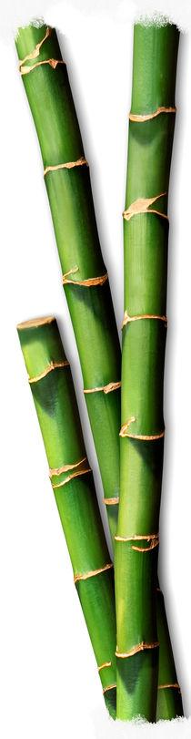 Bamboo I by Cesar Palomino