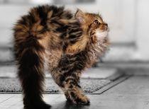 Dromedary cat von gnubier