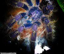 Avicularia spec. von Ridzard  König